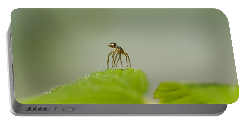 Spider Portable Battery Charger featuring the photograph Itsy Bitsy Spider by Kathy Clark