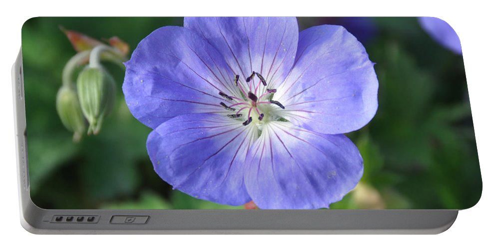 Flower Portable Battery Charger featuring the photograph Itty Bitty Pretty One by Rich Bodane
