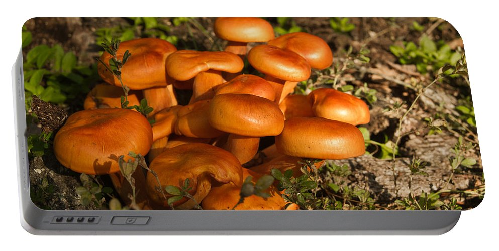 Omphalotus Portable Battery Charger featuring the photograph Jack Olantern Mushrooms 24 by Douglas Barnett