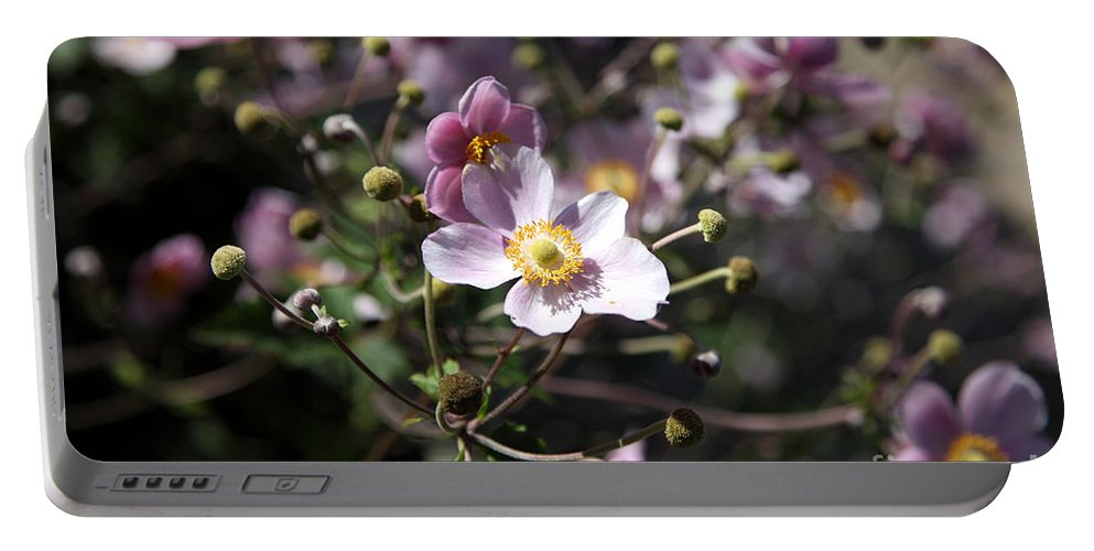 Anemone Tomentosa Portable Battery Charger featuring the photograph Japanese Windflowers by Ted Kinsman