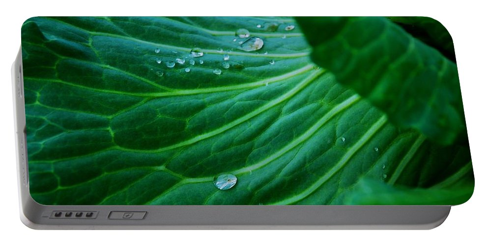 Cabbage Portable Battery Charger featuring the photograph Jewels Of Water by Eric Tressler