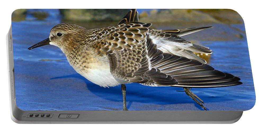 Baird's Sandpiper Portable Battery Charger featuring the photograph Juvenile Baird's Sandpiper by Tony Beck
