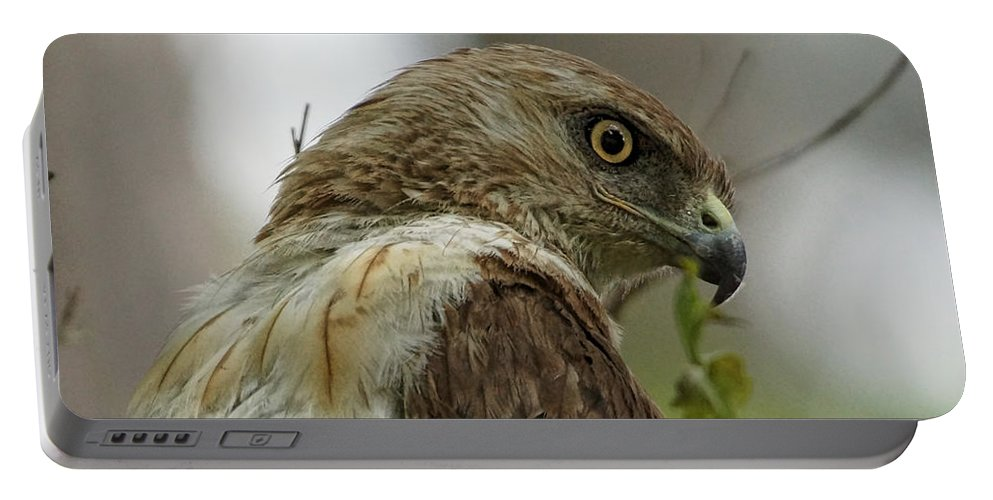 Hawk Portable Battery Charger featuring the photograph Keeping An Eye On You by Alan Hutchins