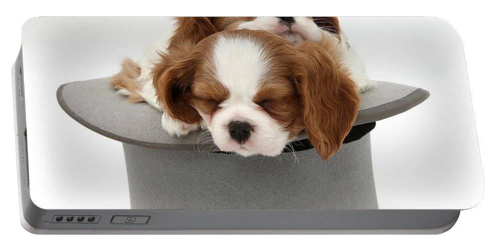 Animal Portable Battery Charger featuring the photograph King Charles Spaniel Puppies by Mark Taylor