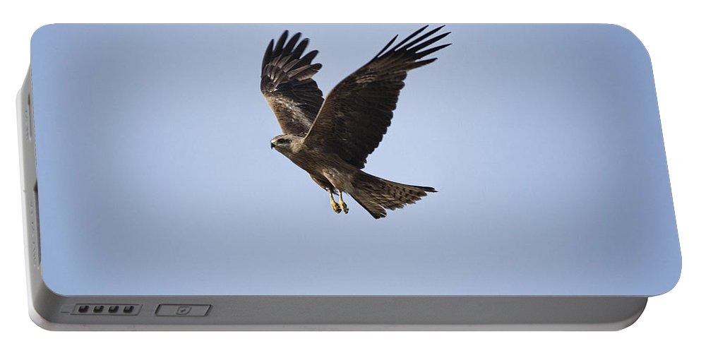 Kite Portable Battery Charger featuring the photograph Kite In Flight by Douglas Barnard