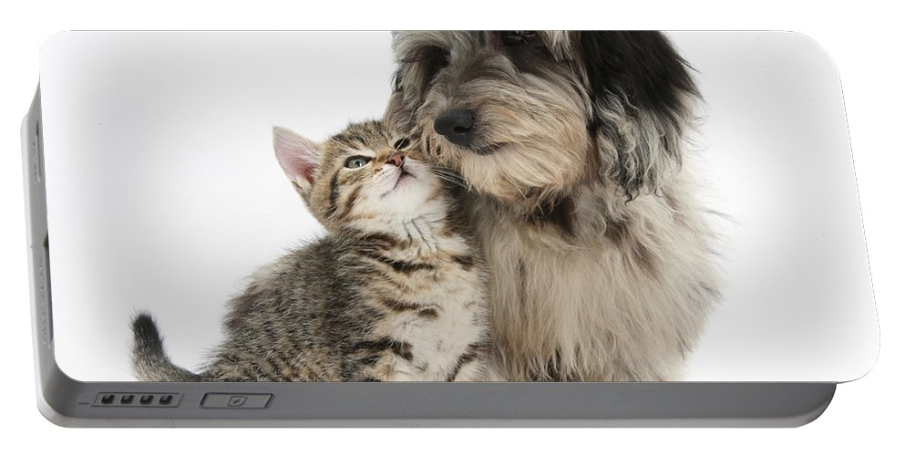 Nature Portable Battery Charger featuring the photograph Kitten And Daxie-doodle Puppy by Mark Taylor