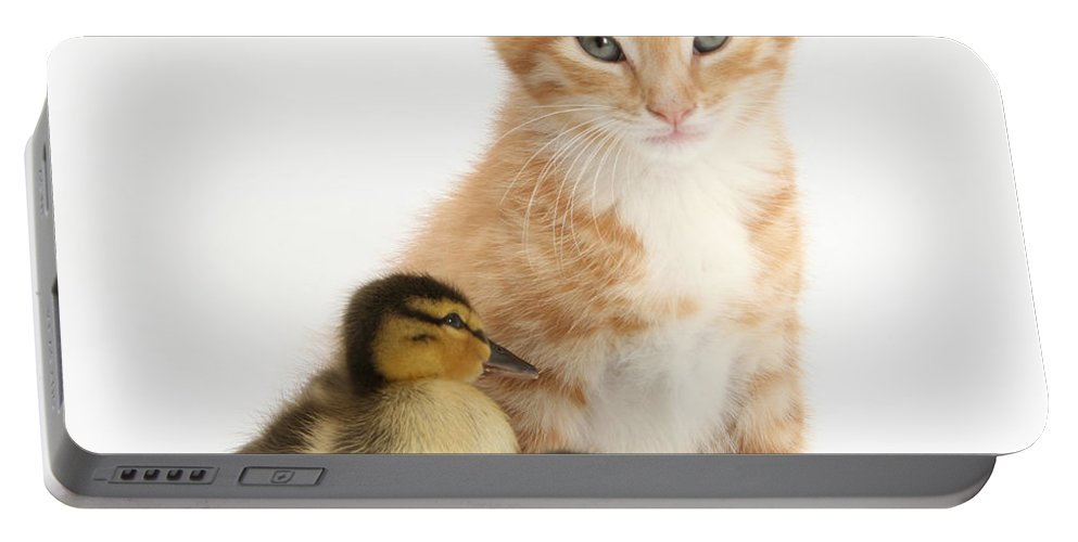 Animal Portable Battery Charger featuring the photograph Kitten And Ducklings by Mark Taylor