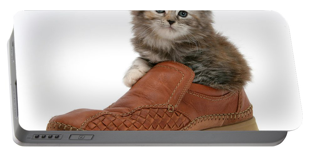 Animal Portable Battery Charger featuring the photograph Kitten In Shoe by Mark Taylor