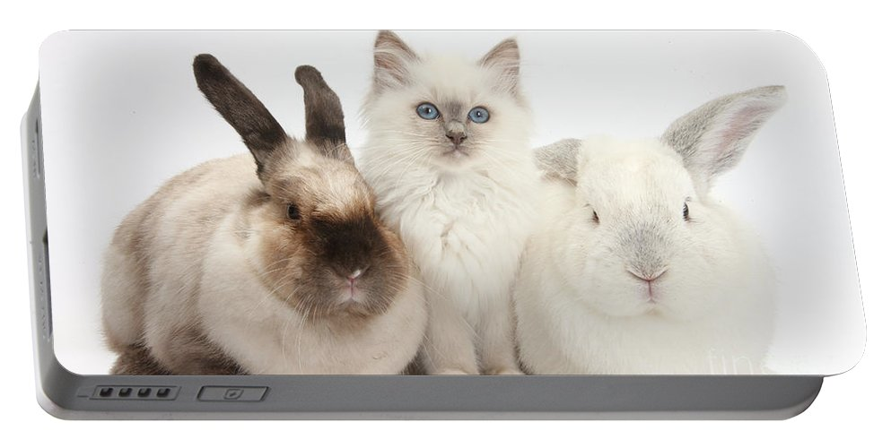 Nature Portable Battery Charger featuring the photograph Kitten With Rabbits by Mark Taylor