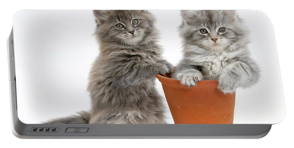 Animal Portable Battery Charger featuring the photograph Kittens In Pot by Mark Taylor