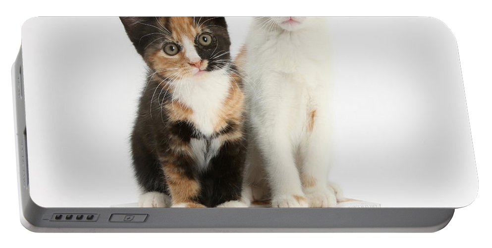 Kitten Portable Battery Charger featuring the photograph Kittens On Birthday Package by Mark Taylor