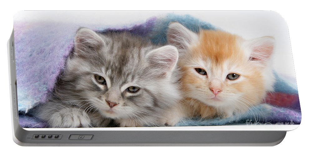 Animal Portable Battery Charger featuring the photograph Kittens Under Blanket by Mark Taylor