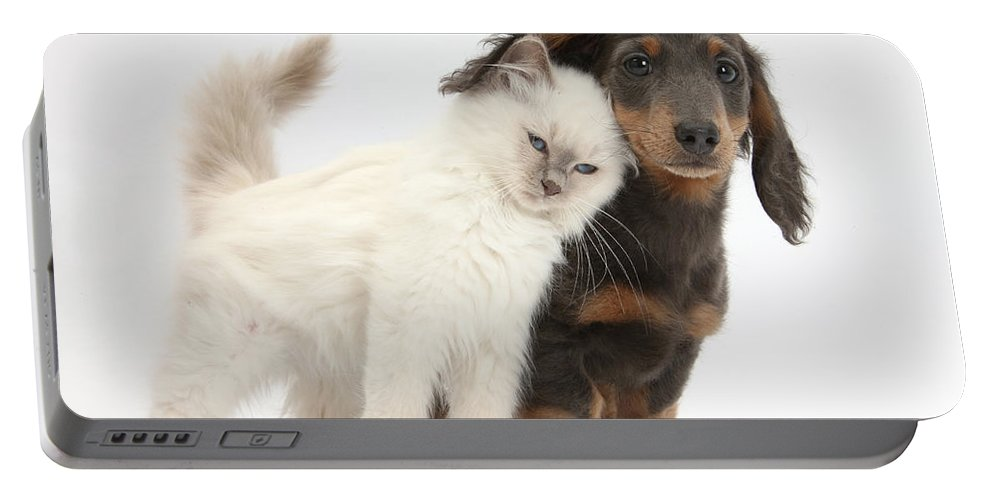 Dog Portable Battery Charger featuring the photograph Kitty Rubbing Against Dachshund by Mark Taylor