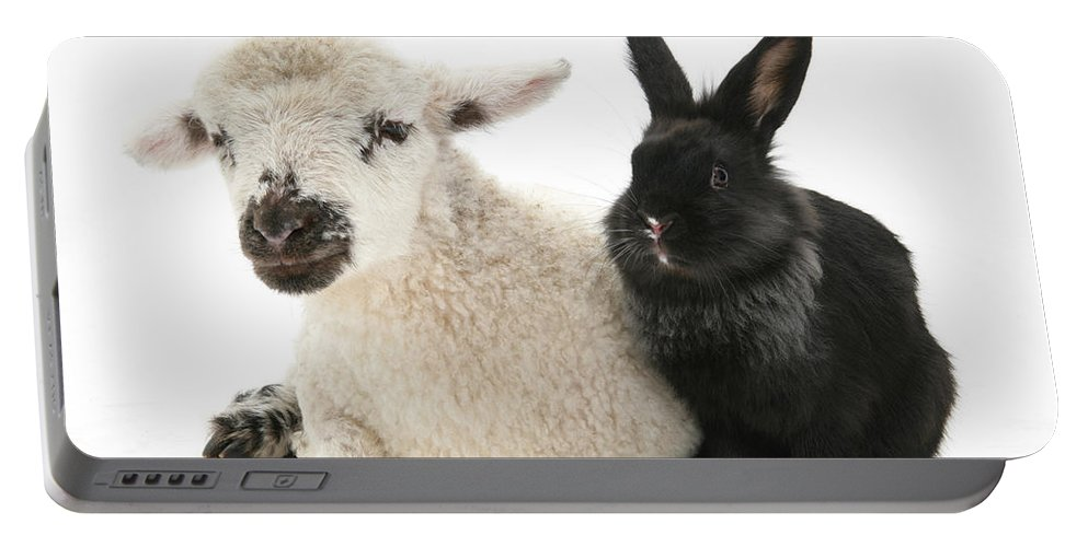 Animal Portable Battery Charger featuring the photograph Lamb And Rabbit by Mark Taylor