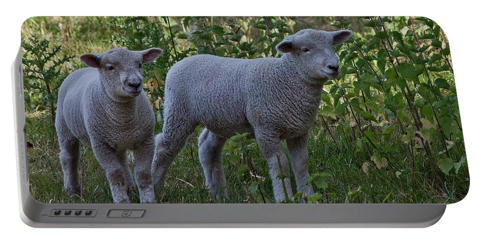 Lamb Portable Battery Charger featuring the photograph Lambs by Dawn OConnor
