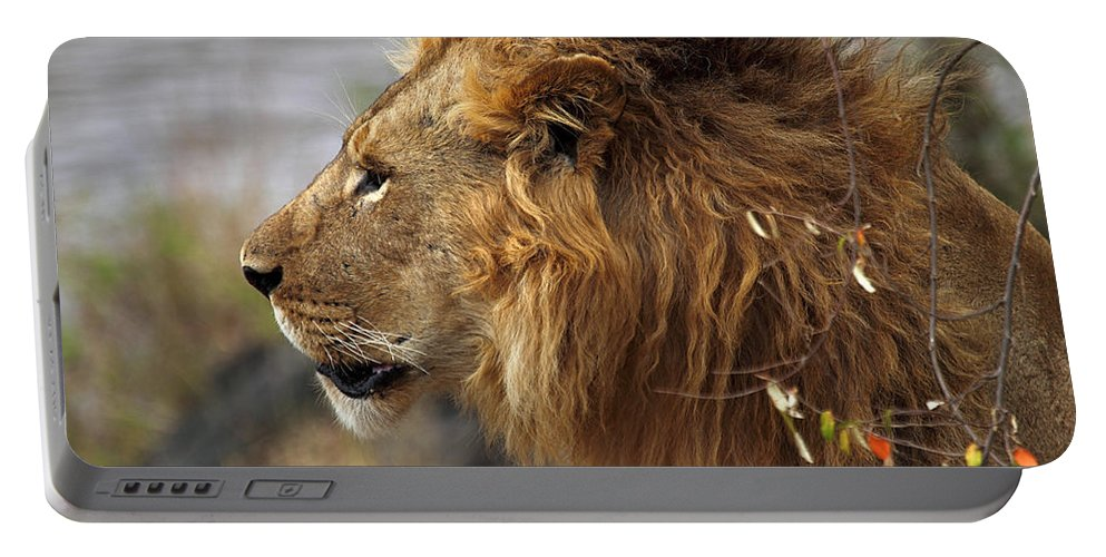 Lion Portable Battery Charger featuring the photograph Large Male Lion Emerging From The Bush by Carole-Anne Fooks