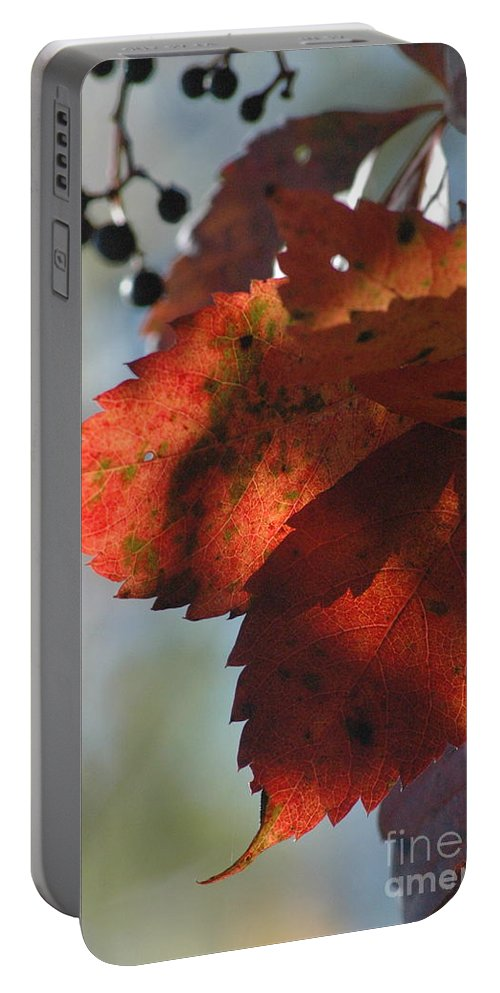 Leaves Portable Battery Charger featuring the photograph Last Look by Trish Hale