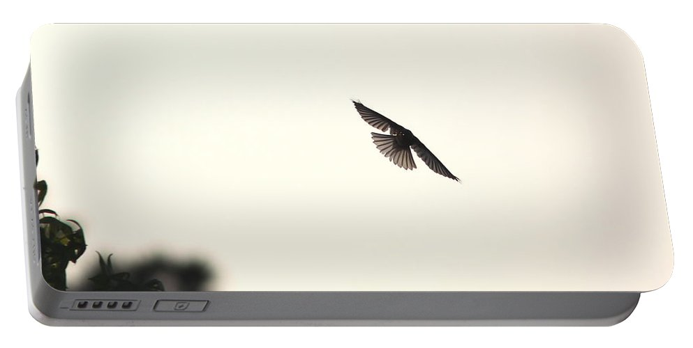 Eastern Bluebird Portable Battery Charger featuring the photograph Late Afternoon Flight by Travis Truelove