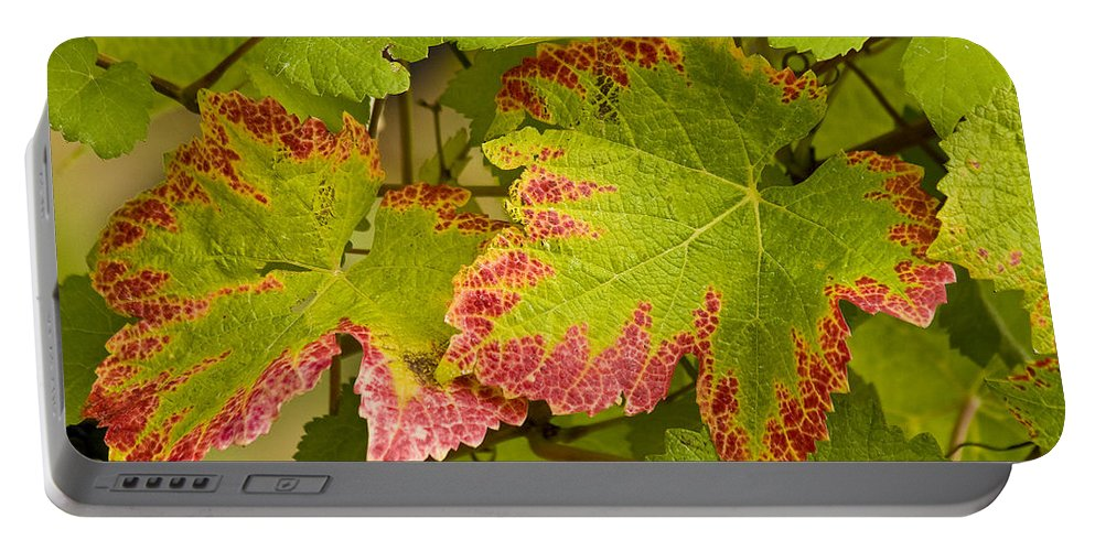 Vineyard Portable Battery Charger featuring the photograph Leaf Design by Jean Noren