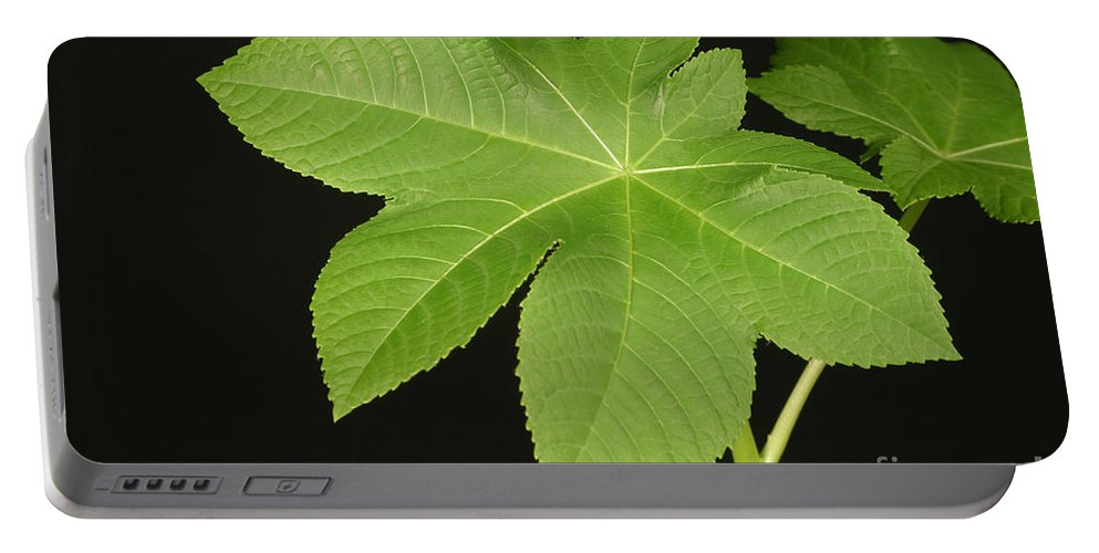 Plant Portable Battery Charger featuring the photograph Leaf Of Castor Bean Plant by Ted Kinsman