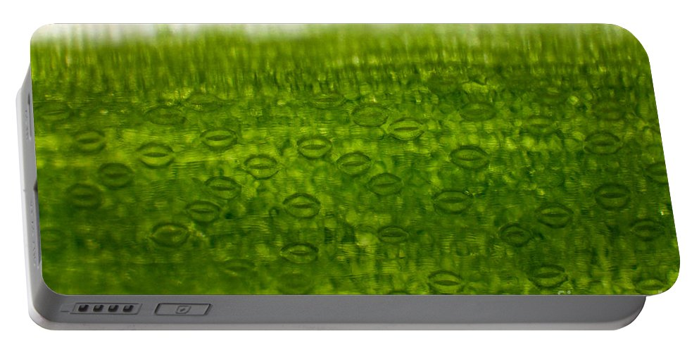 Epidermis Portable Battery Charger featuring the photograph Leaf Stomata, Lm by Ted Kinsman