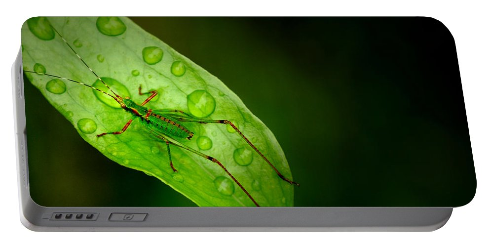 Leafhopper Portable Battery Charger featuring the photograph Leafhopper 2 by David Weeks