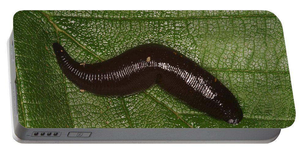Fauna Portable Battery Charger featuring the photograph Leech by Ted Kinsman