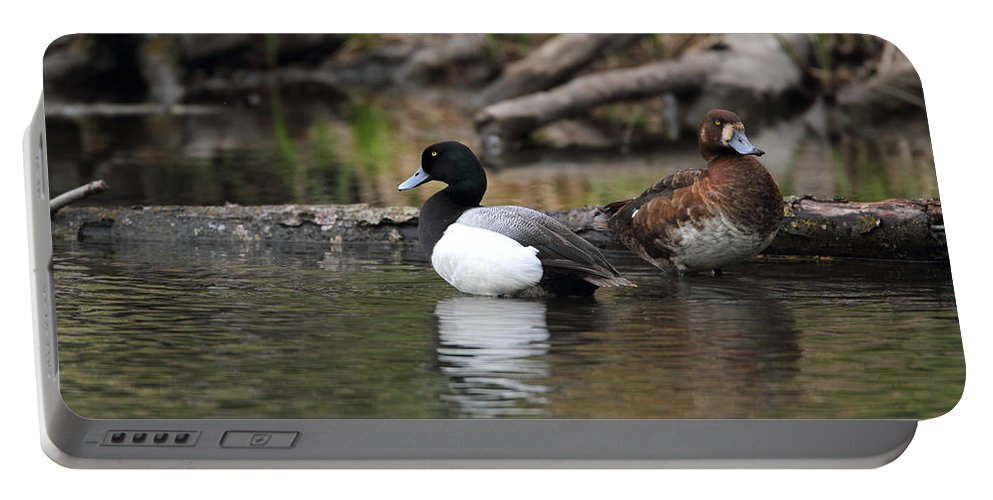 Doug Lloyd Portable Battery Charger featuring the photograph Lesser Scaup by Doug Lloyd
