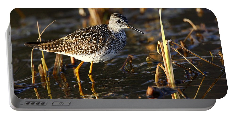 Doug Lloyd Portable Battery Charger featuring the photograph Lesser Yellowlegs by Doug Lloyd