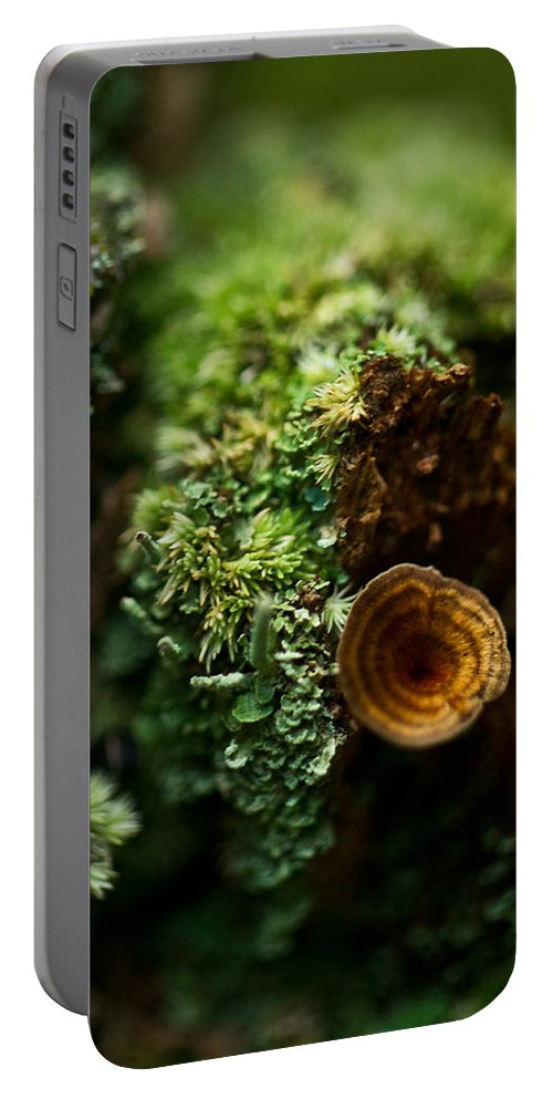 Lichen Portable Battery Charger featuring the photograph Lichen And Fungi 1 by Douglas Barnett