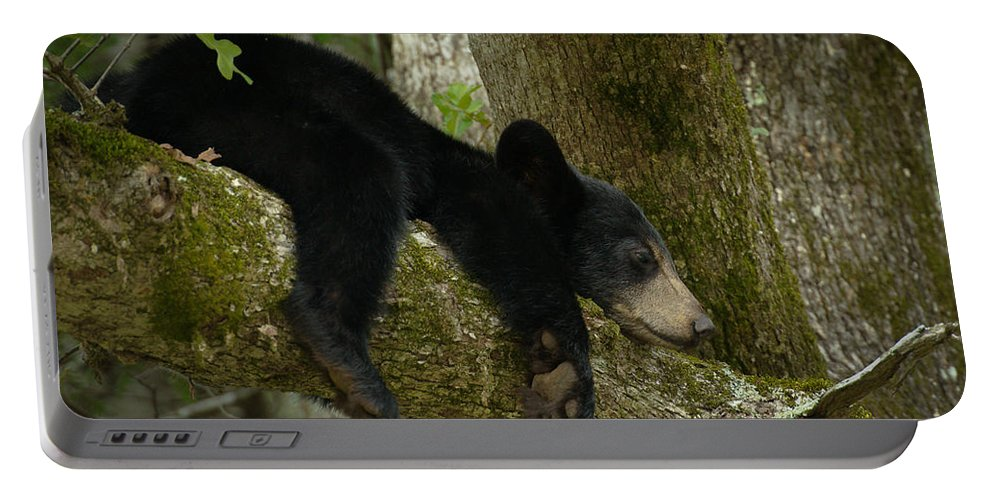 Cades Cove Portable Battery Charger featuring the photograph Life Is A Bear Sometimes by Charlie Choc
