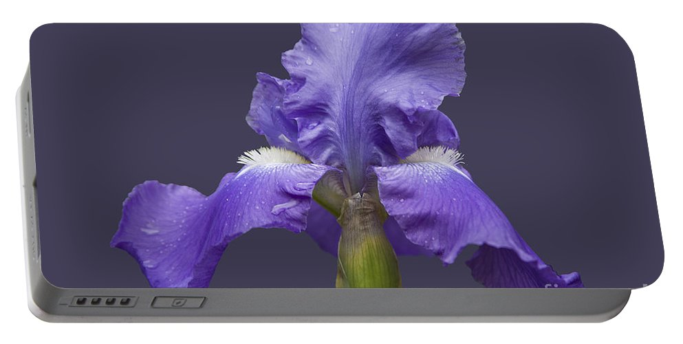 Nature Portable Battery Charger featuring the photograph Lilac Iris by Heiko Koehrer-Wagner
