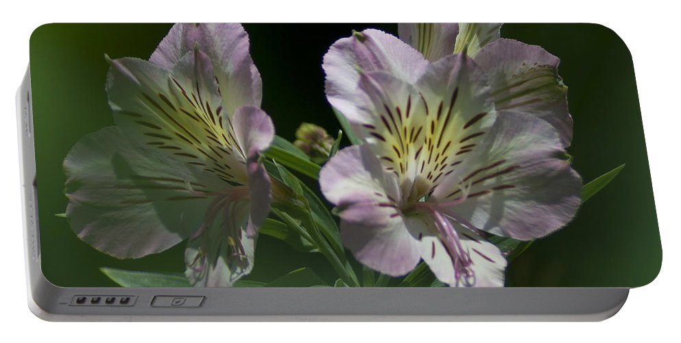 Nature Portable Battery Charger featuring the photograph Lily - Liliaceae 3 by Heiko Koehrer-Wagner