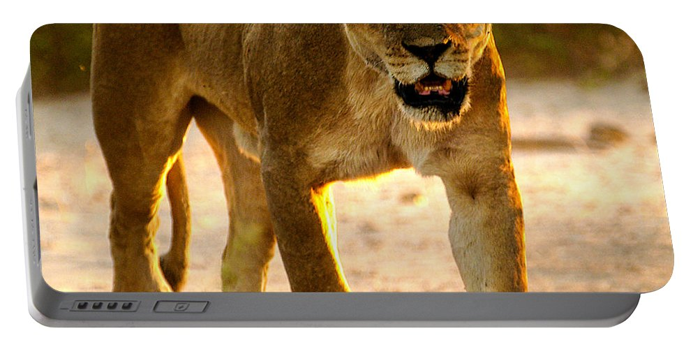 Action Portable Battery Charger featuring the photograph Lioness by Alistair Lyne