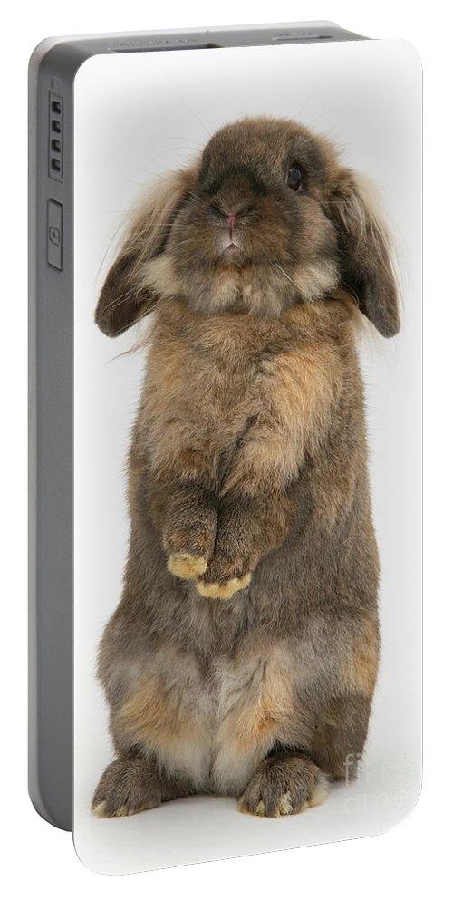 Animal Portable Battery Charger featuring the photograph Lionhead Rabbit by Mark Taylor
