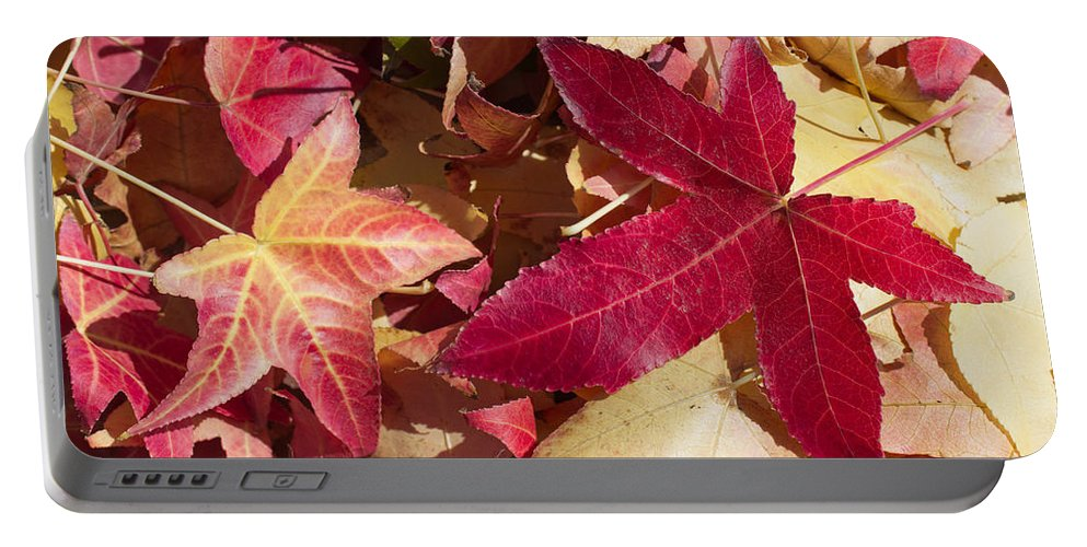 Abstract Portable Battery Charger featuring the photograph Liquidambar Autumn by Heidi Smith