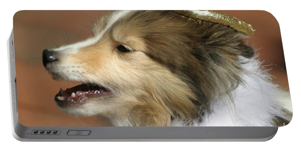 Dogs Portable Battery Charger featuring the photograph Little Angel by Living Color Photography Lorraine Lynch