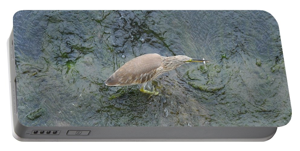 Bird Portable Battery Charger featuring the photograph Little Bittern by Rich Bodane