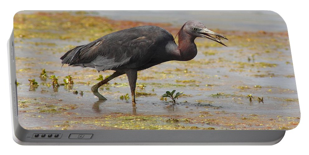 Wildlife Portable Battery Charger featuring the photograph Little Blue Heron In Swamp by Robert Frederick