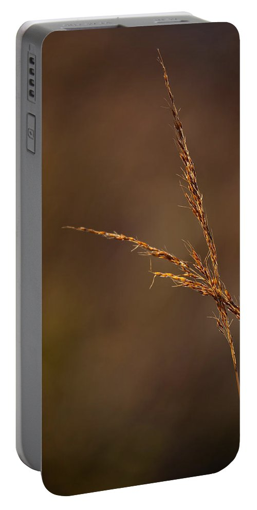 Grass Portable Battery Charger featuring the photograph Little Bluestem On The Prairie by Steve Gadomski