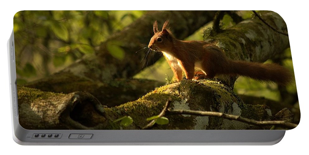 Red Squirrel Portable Battery Charger featuring the photograph Little Red by Gavin Macrae