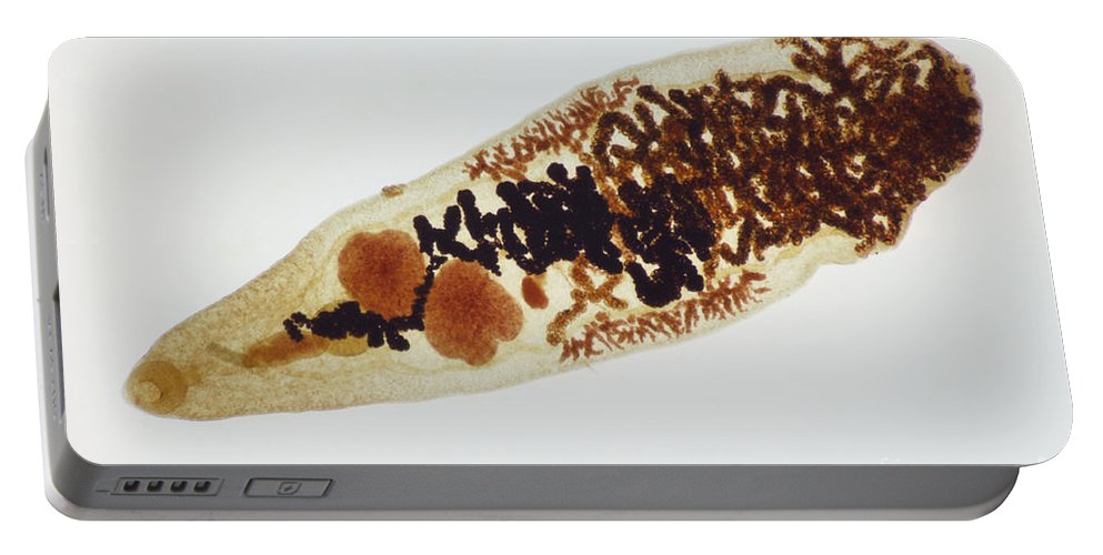 Parasitic Flatworm Portable Battery Charger featuring the photograph Liver Fluke Lm by M. I. Walker