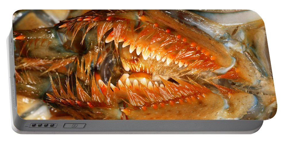 Northern Lobster Portable Battery Charger featuring the photograph Lobster Mouth by Ted Kinsman