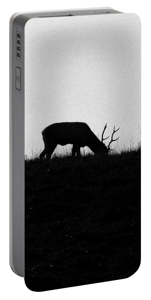 Deer Portable Battery Charger featuring the photograph Lone Male Grazing On Top Of Hill. by Crystal Heitzman Renskers