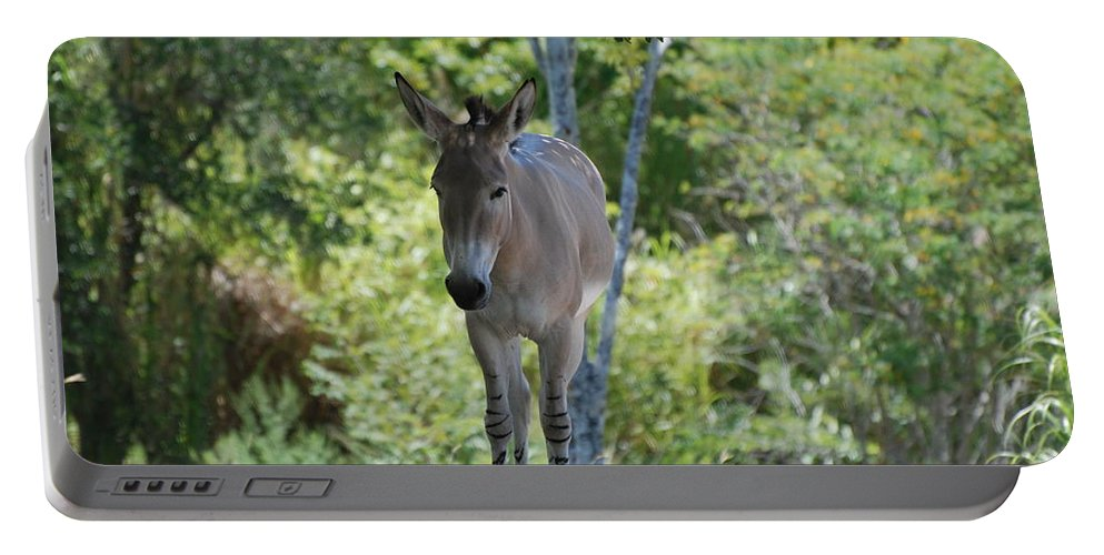Animal Portable Battery Charger featuring the photograph Lonely by Rob Hans