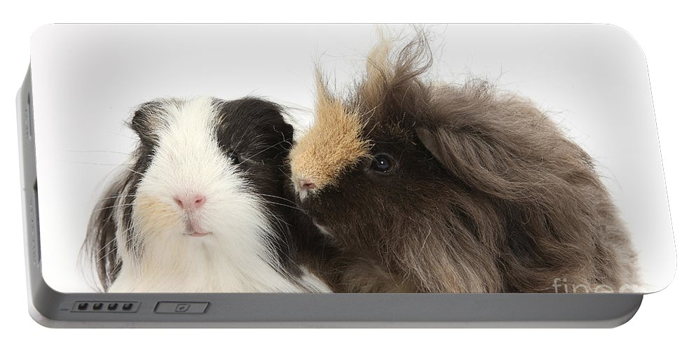 Nature Portable Battery Charger featuring the photograph Long-haired Guinea Pigs by Mark Taylor