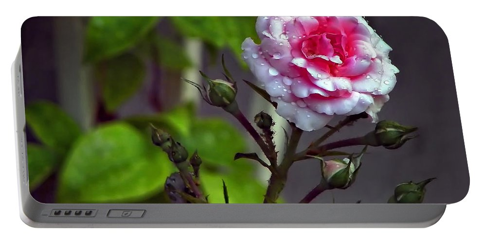 Rose Portable Battery Charger featuring the photograph Longing by Steve Harrington