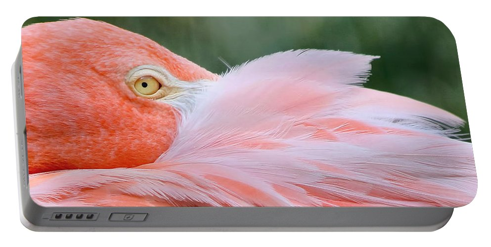 Pink Flamingo Portable Battery Charger featuring the photograph Looking At You by Kim Hojnacki