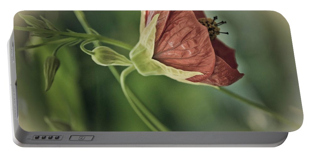 Plant Portable Battery Charger featuring the photograph Lovely Lady by Trish Tritz