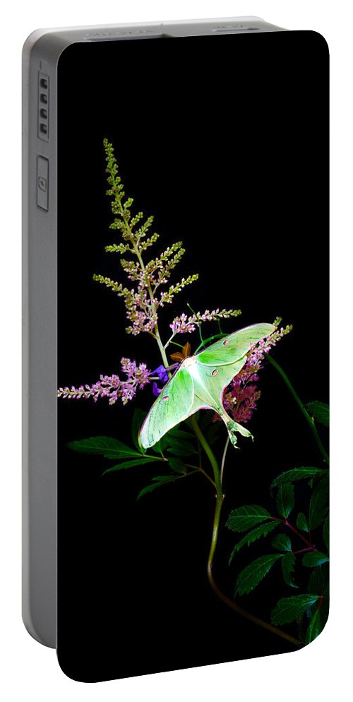 Luna Moth Portable Battery Charger featuring the photograph Luna Moth On Astilby Flower by Randall Branham